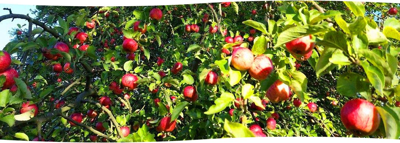 slider-aepfel