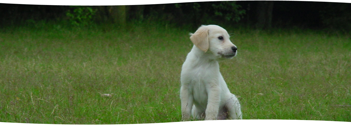 slider-hund